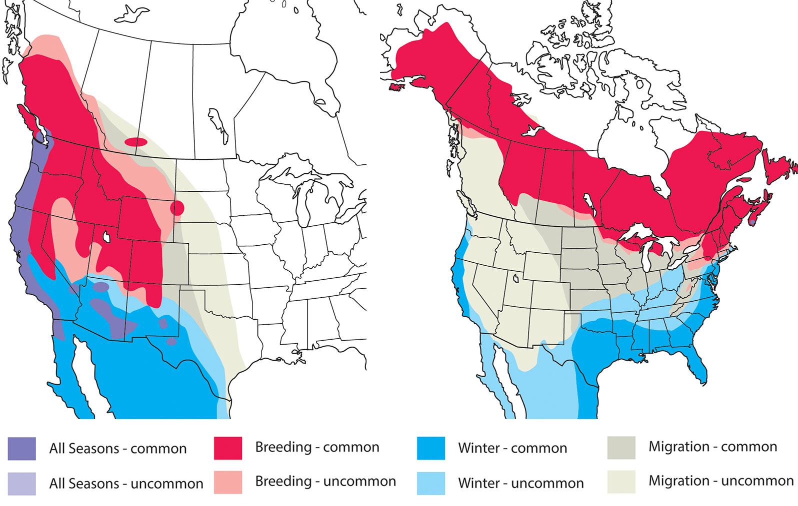 From left: Range map for Audubon's Warbler; range map for Myrtle Warbler. Maps: Kenn Kaufman