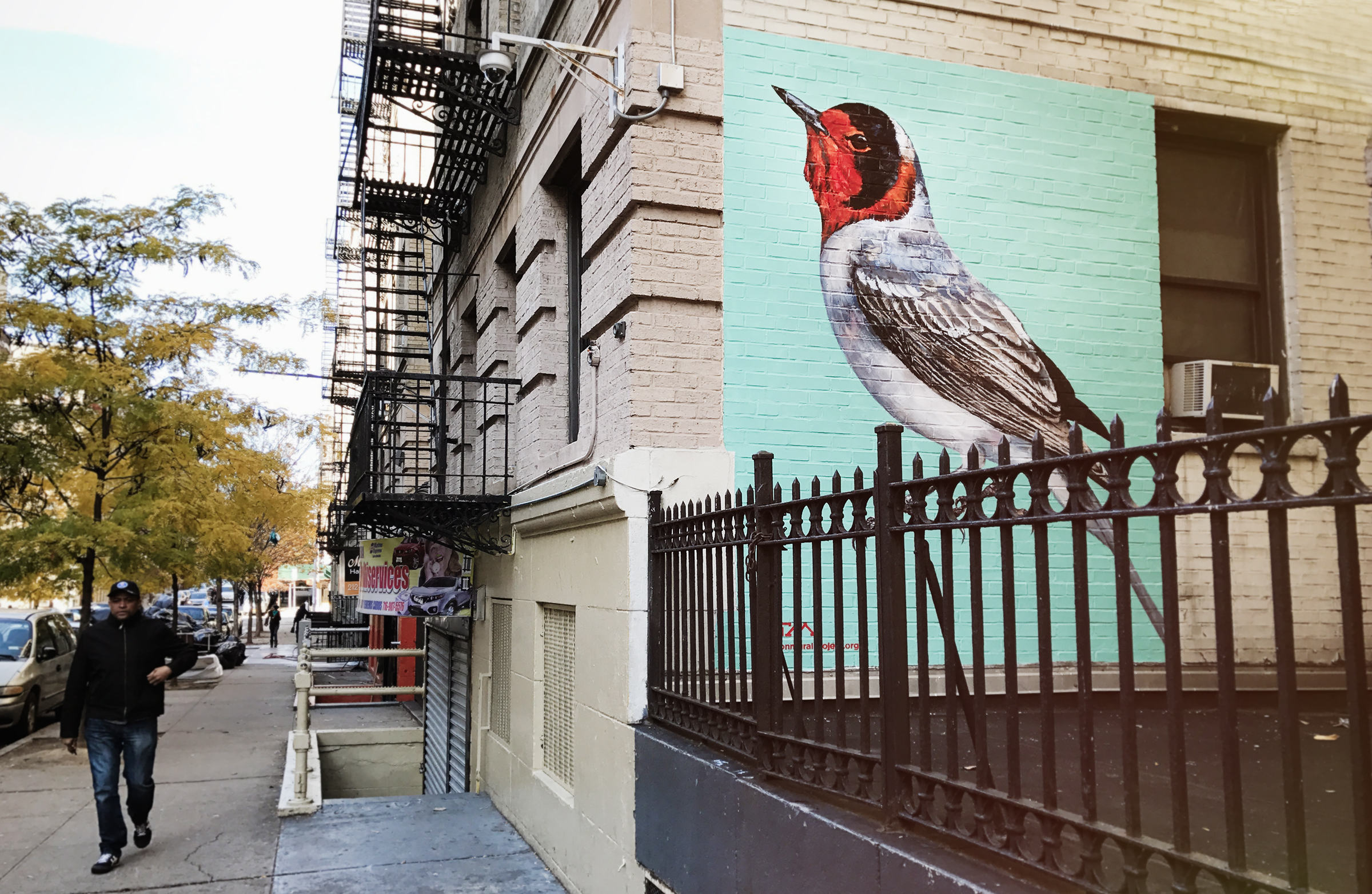 Red-faced Warbler by ATM, located on 601 West 162 St. in New York City. Mike Fernandez/Audubon