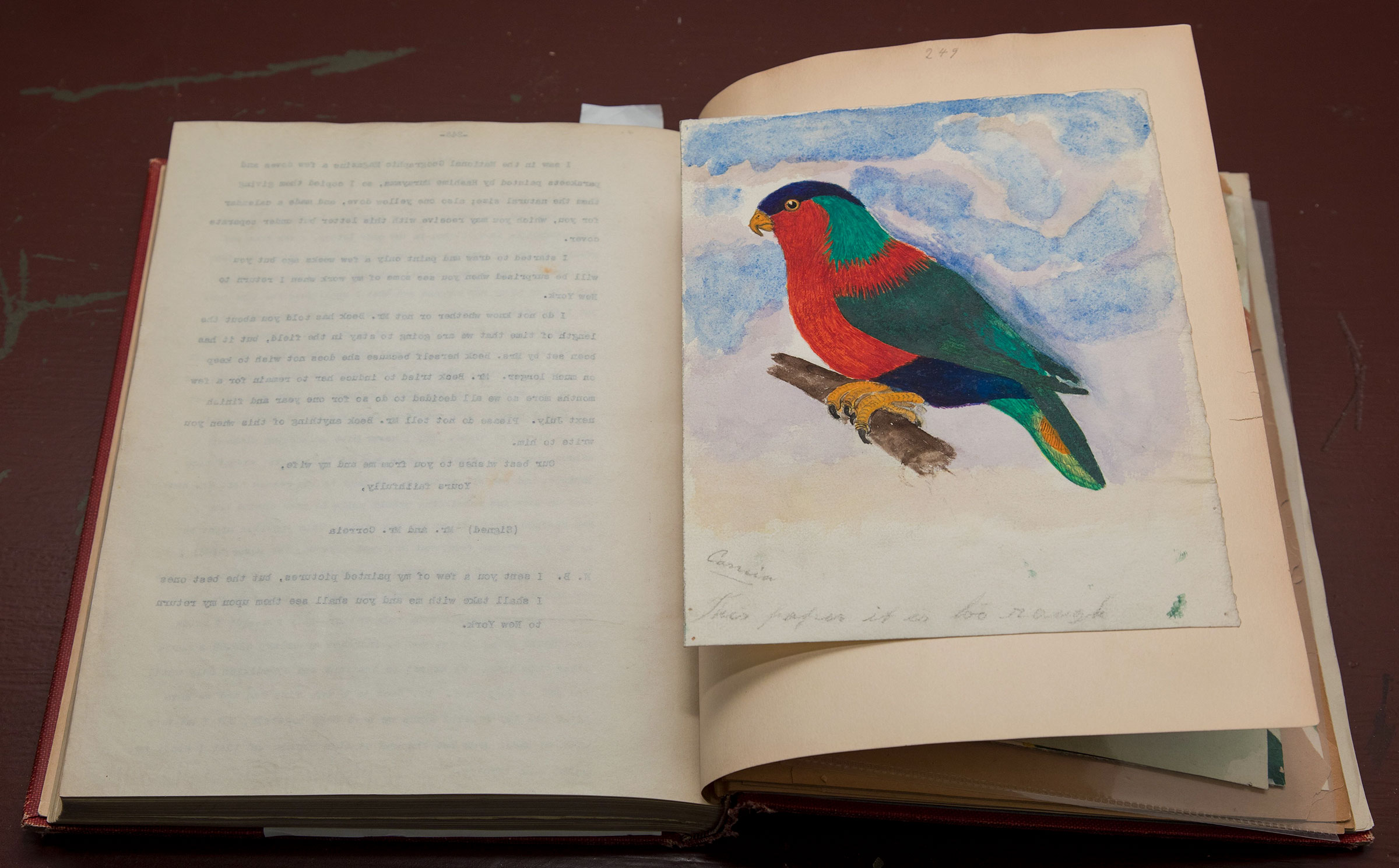 Page from ornithologist José Correia's personal journal. M. Shanley/AMNH