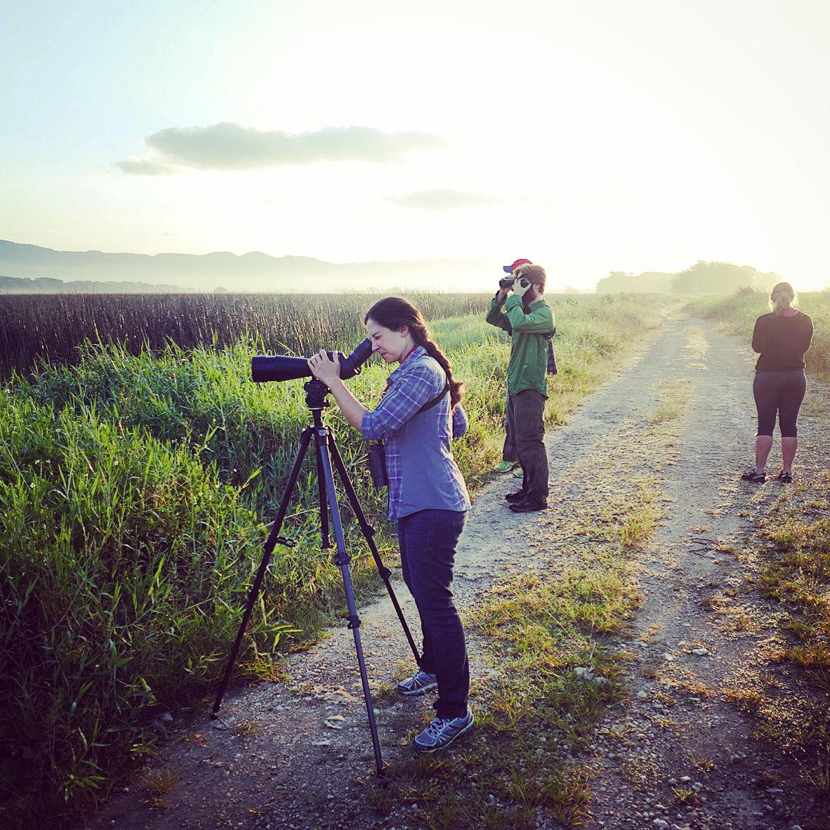 The Warbler Crew spots birds at a wetland near Montego Bay. Noah Strycker