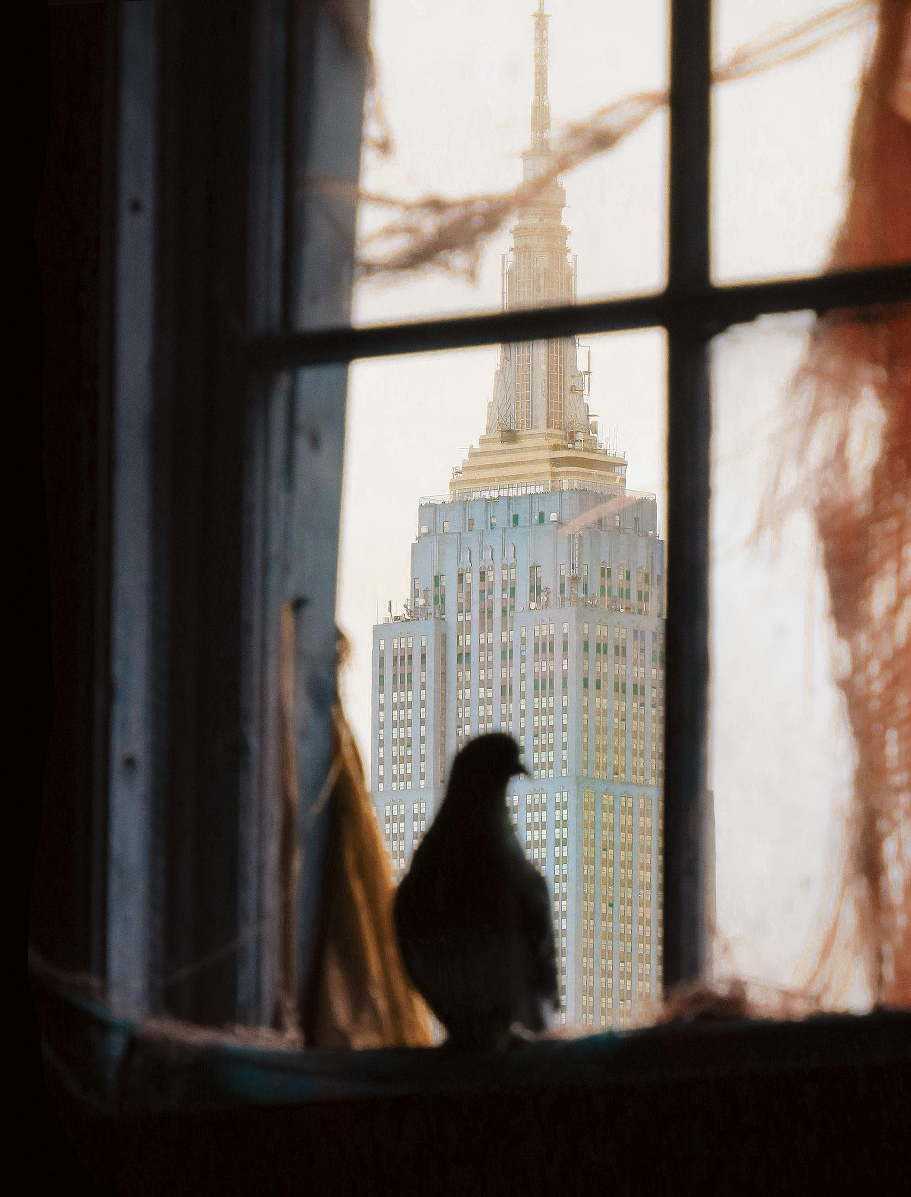 Rock Pigeon. Andrew Garn