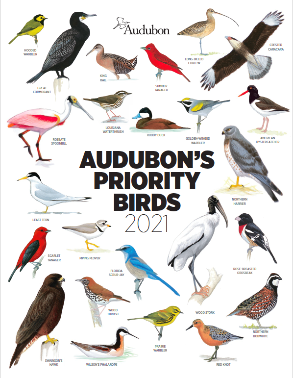 """Cover with text saying """"Audubon's Priority Birds 2021,"""" surrounded by approximately 20 different species of North American birds."""