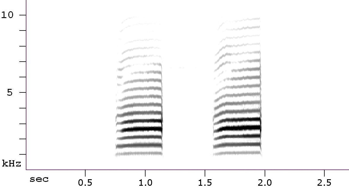 Red-breasted Nuthatch spectrogram. Courtesy of Nathan Pieplow