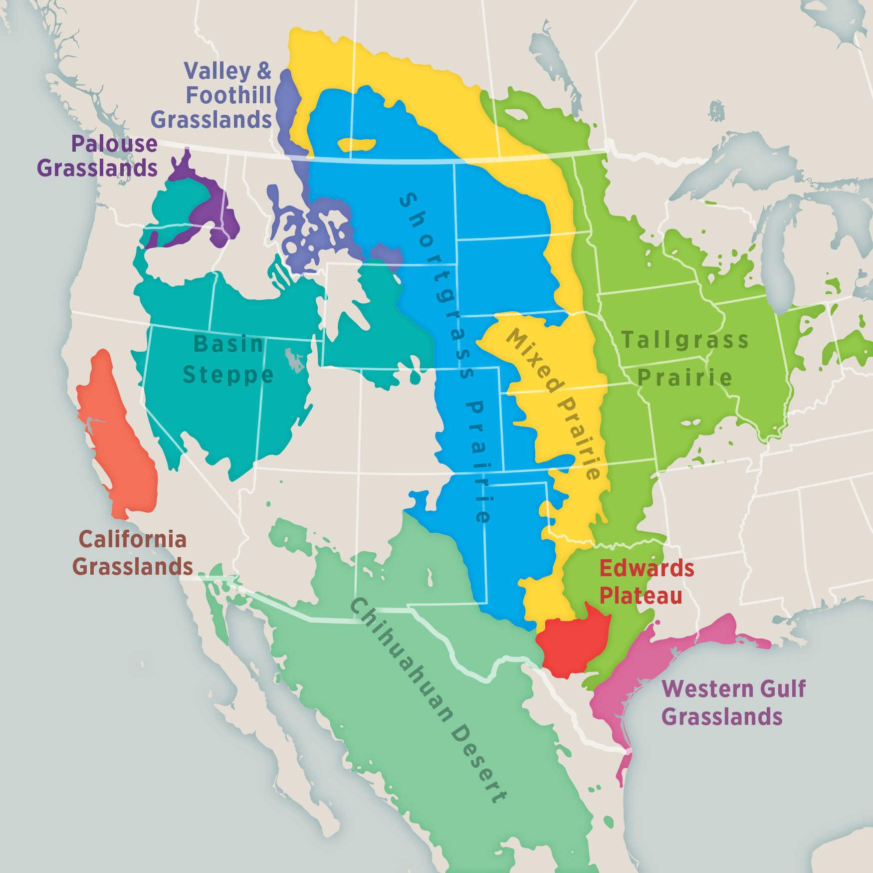 Historic grassland types of North America based on mapping data from NatureServe (Comer et al. 2018) and the International Vegetation Classification and Terrestrial Ecoregions of the World (Dixon et al. 2014). Map: Daniel Huffman