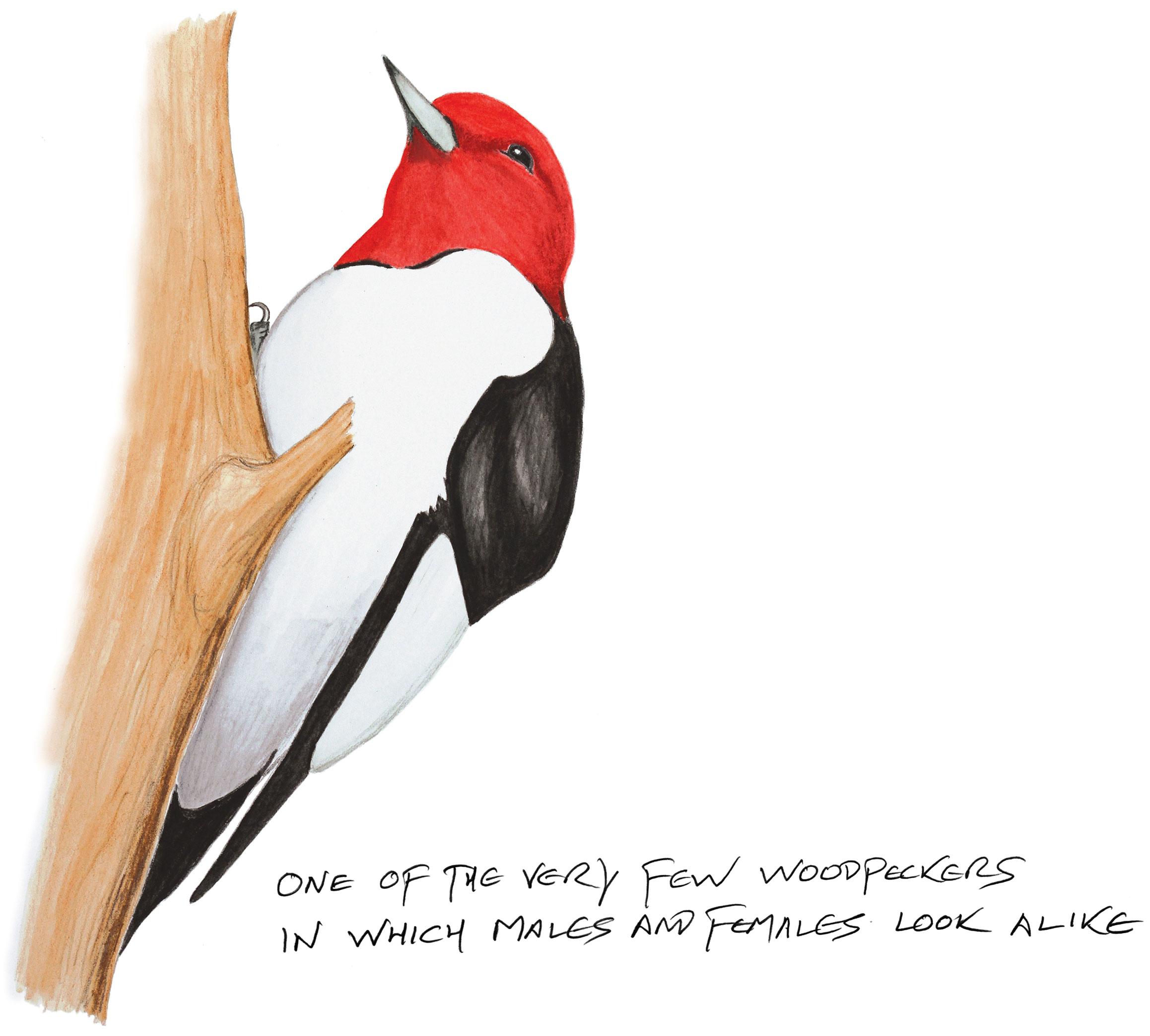 Illustration: Kenn Kaufman