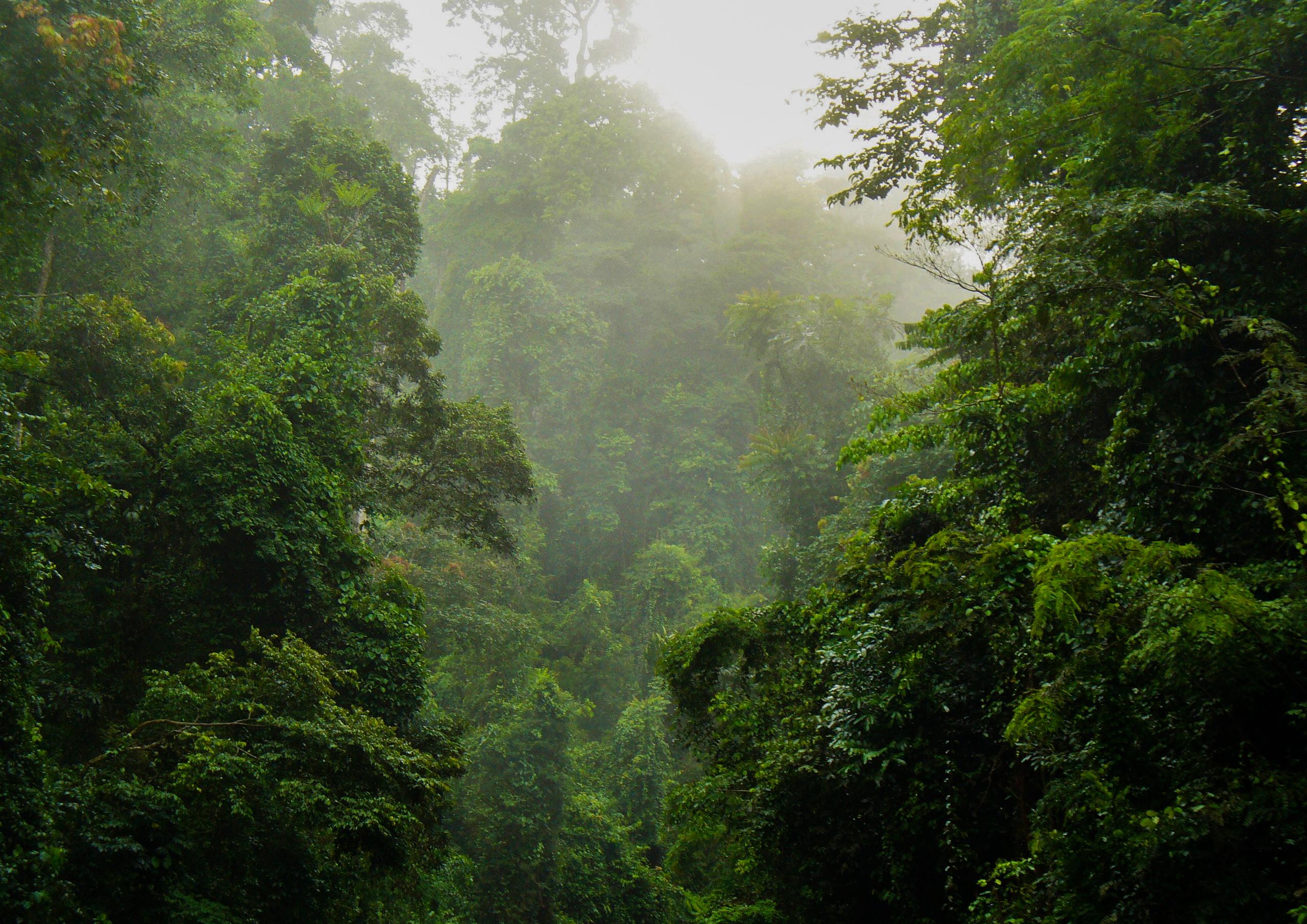 The rain forest in Ghana's Kakum National Park. Nicole Arcilla