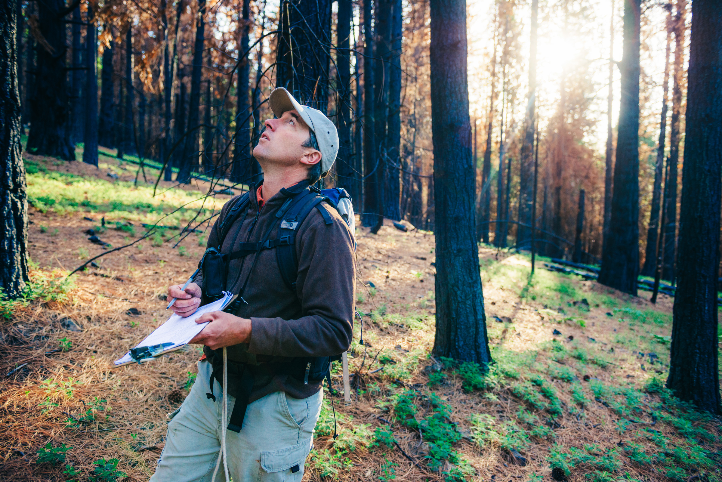 Using this auditory repertoire of several hundred calls, Ryan Burnett monitors birds in five-minute point counts to assess the long-term health of habitat. The Black-backed Woodpecker's call is a sharp, distinct check. Ken Etzel