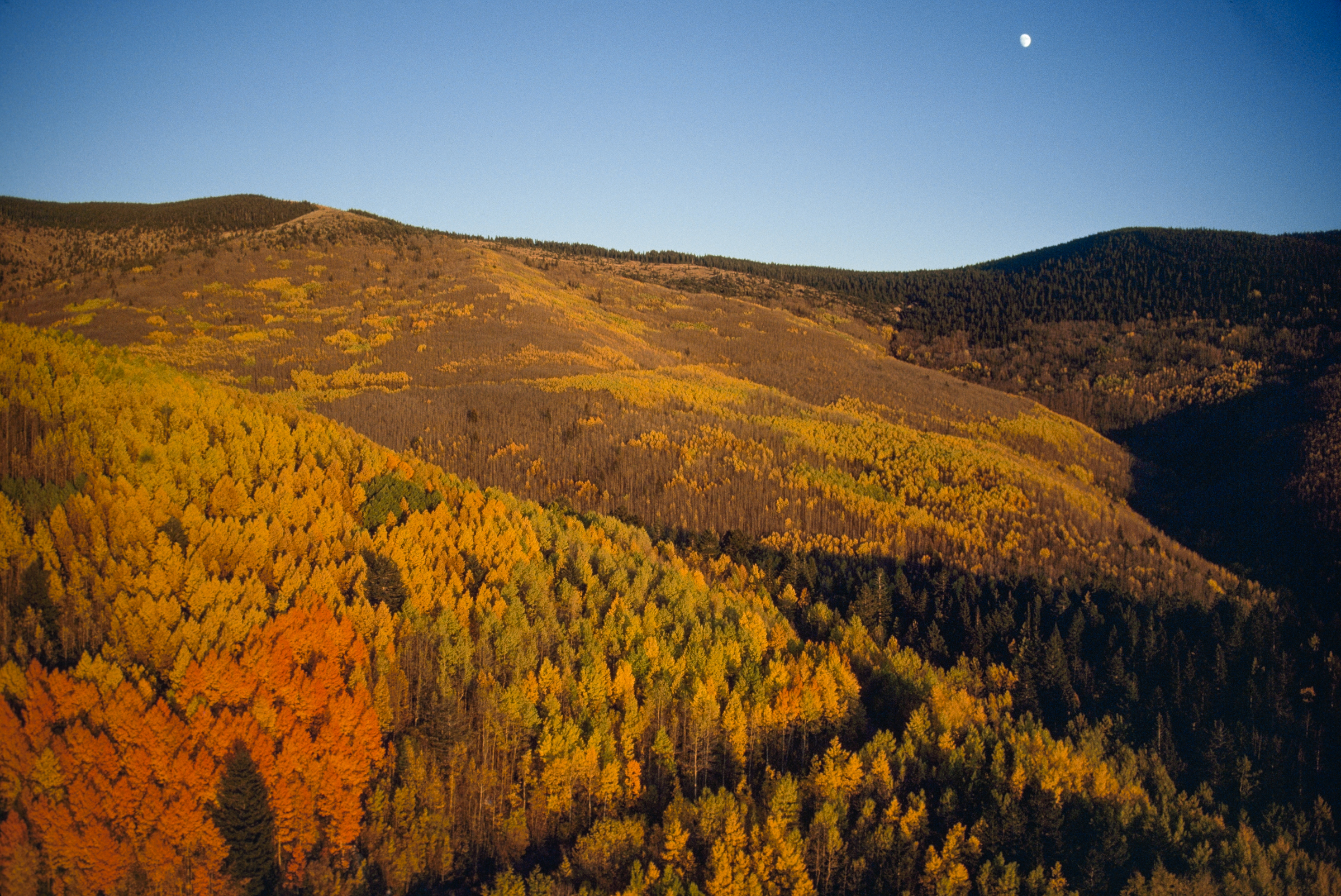 In fall, the Santa Fe National Forest is a mixture of gold and green, thanks to its aspen and evergreen trees. Gordon Gahan/National Geographic Creative