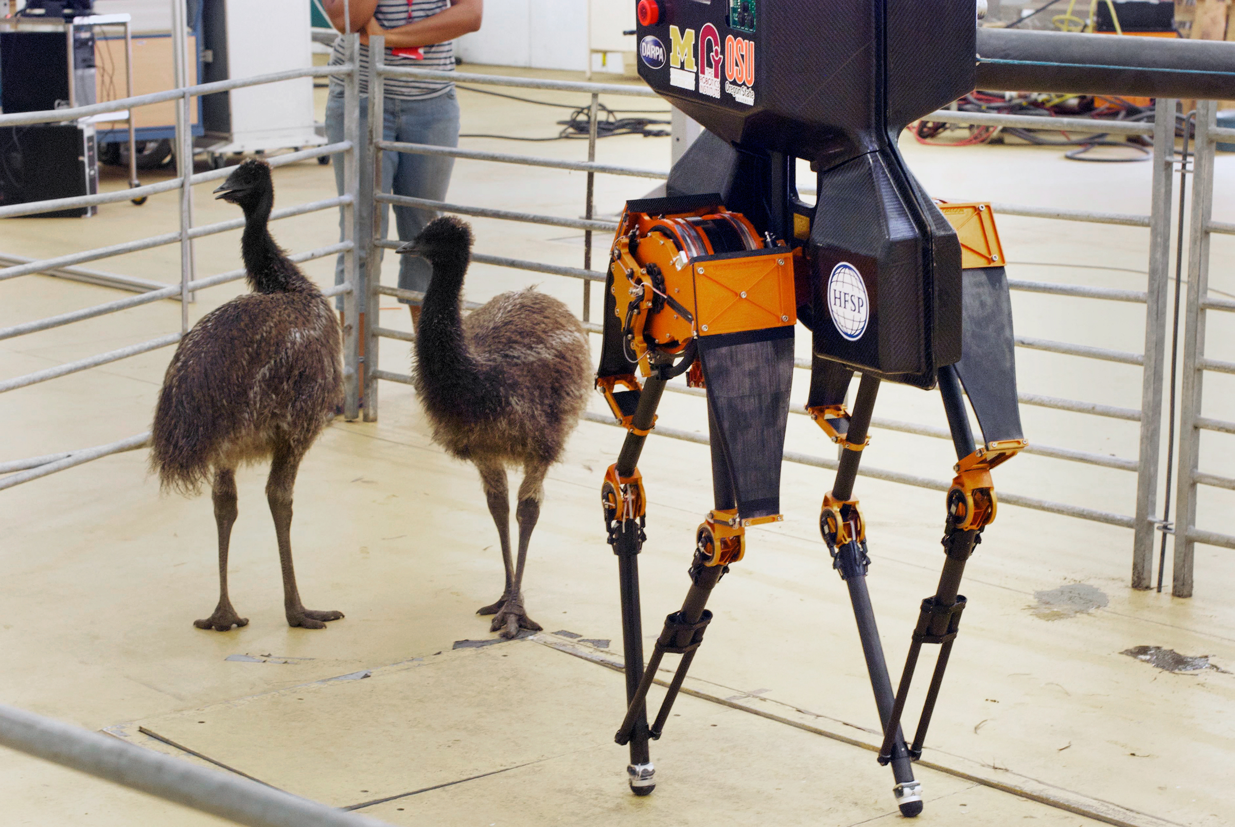 Young Emus—some of the birds that inspired the design—stand beside the ATRIAS. Dr. Alexander Spröwitz