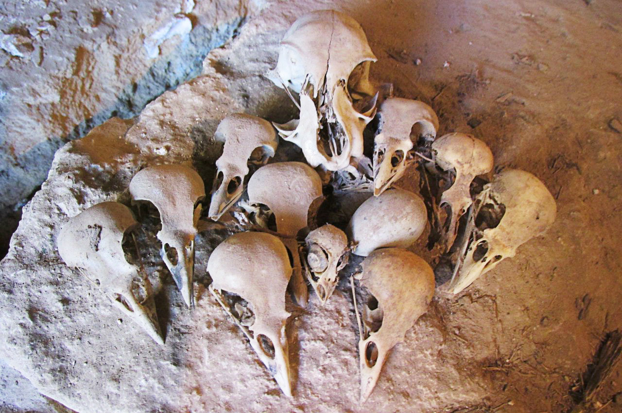 There were also a number of bird skulls amidst the historic documents. Courtesy of Zvenigorod Historical and Architectural Museum