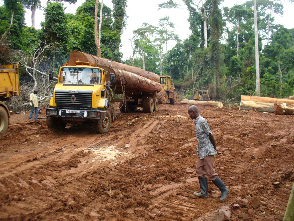 A legal logging operation in the Sui River Forest Reserve. Nicole Arcilla