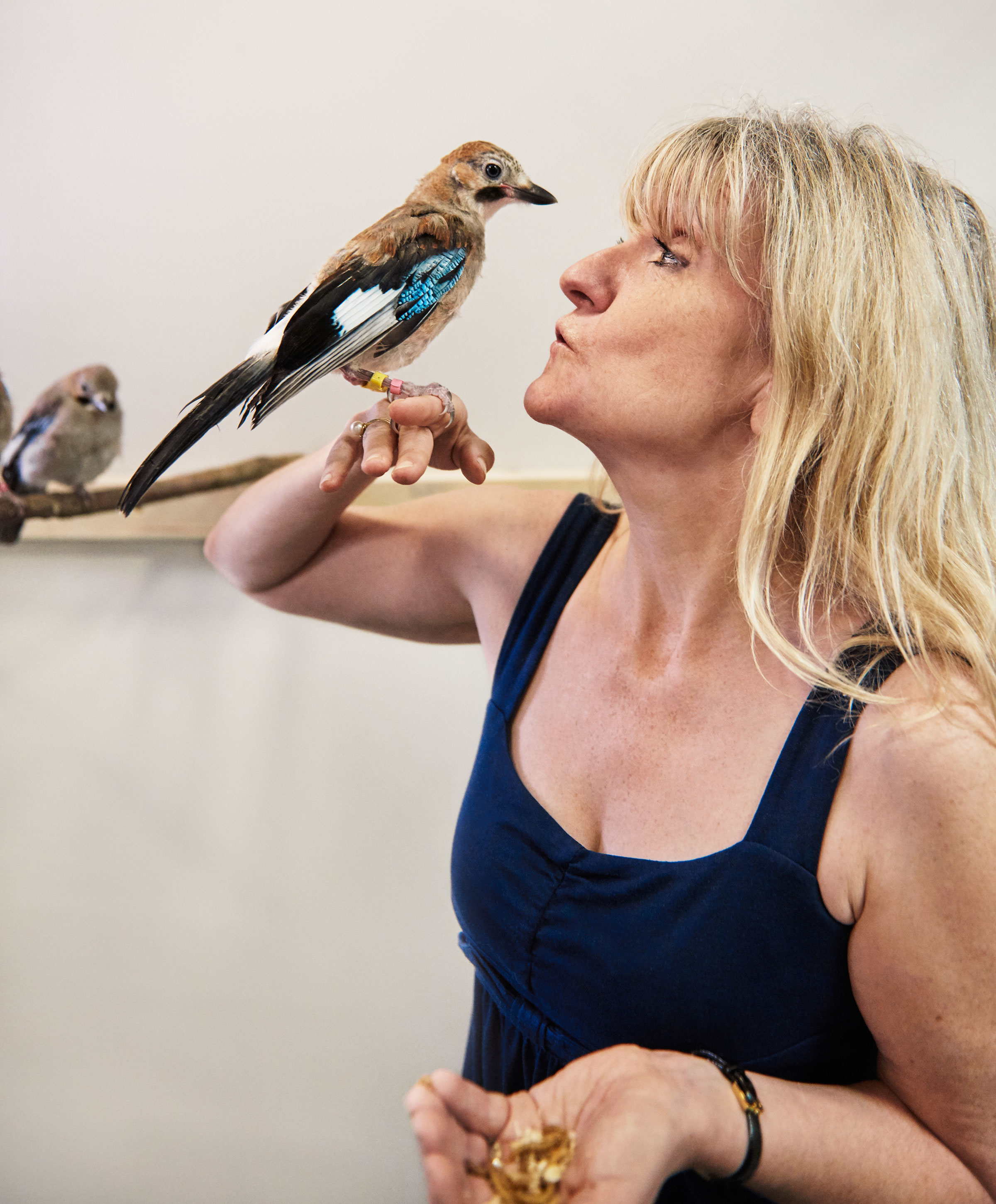 Researcher Nicky Clayton runs behavioral experiments with captive Eurasian Jays in the aviaries at Cambridge University. Her research has vastly expanded scientists' understanding of avian intelligence. Trevor Ray Hart