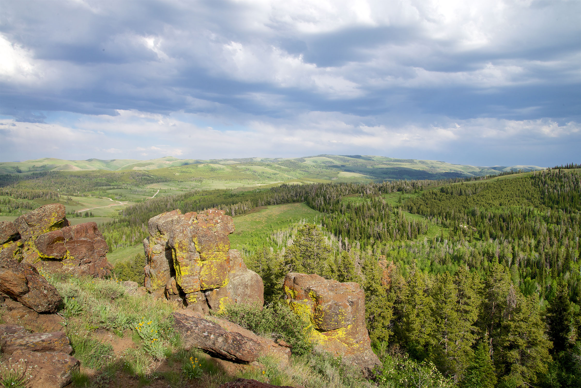 A landscape shot of rolling, green hills dominated by stands of lodgepole pine trees, with some sagebrush prairie intermixed, in South Hills, Idaho. Craig Benkman