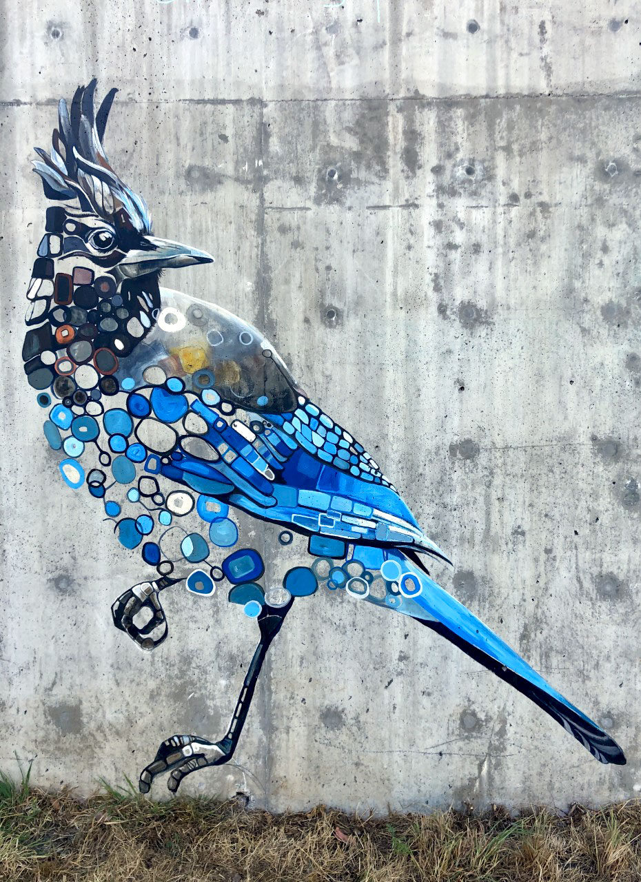 A mural of a Steller's Jay, featuring a head crest and blue and black body feathers, painted on a wall at Heron Meadown. The Steller's Jay is poised to lose 17 percent of its summer range in Washington State (and 45 percent overall) if global temperatures continue on pace to rise by 3°C by the end of the century.