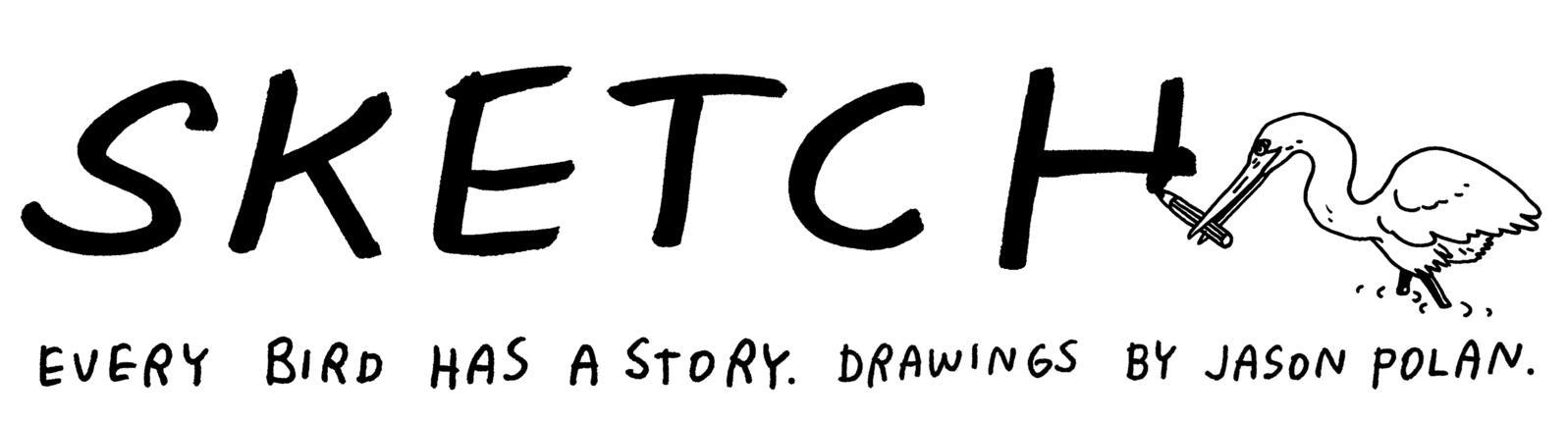 Every bird has a story. Drawings by Jason Polan.