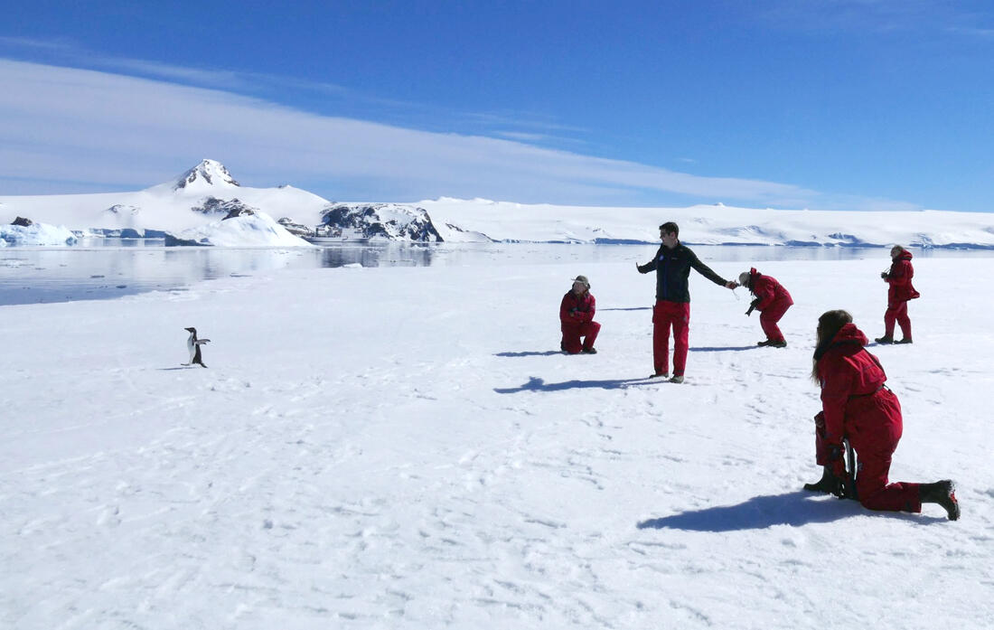Tourists from the Akademik Ioffe admire an Adelie Penguin. Credit: Noah Strycker