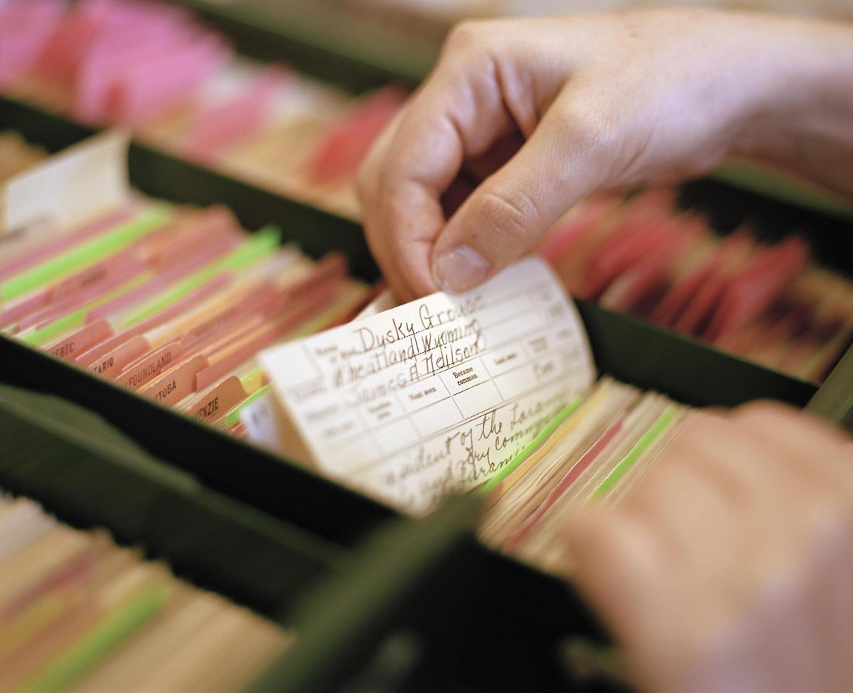 Volunteers are digitizine millions of bird records dating to 1880. Credit: Robert Wright