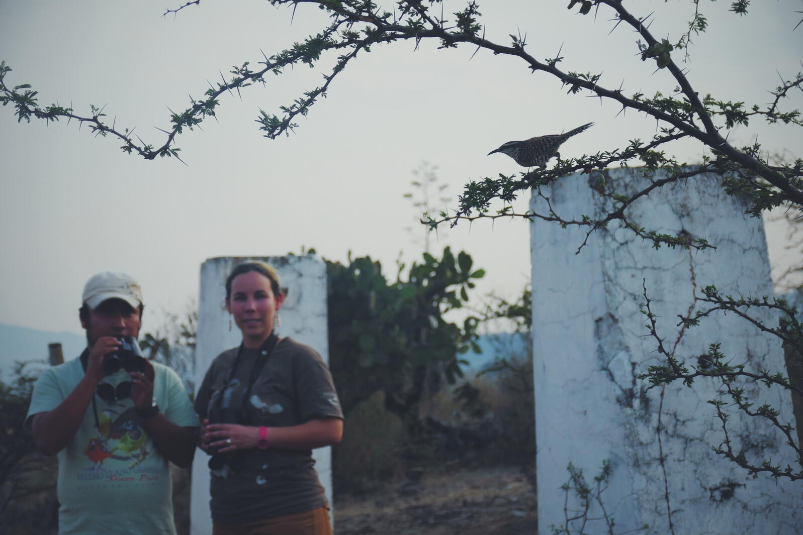 Eric and Jilly watch an endemic Boucard's Wren on the outskirts of Oaxaca. Noah Strycker