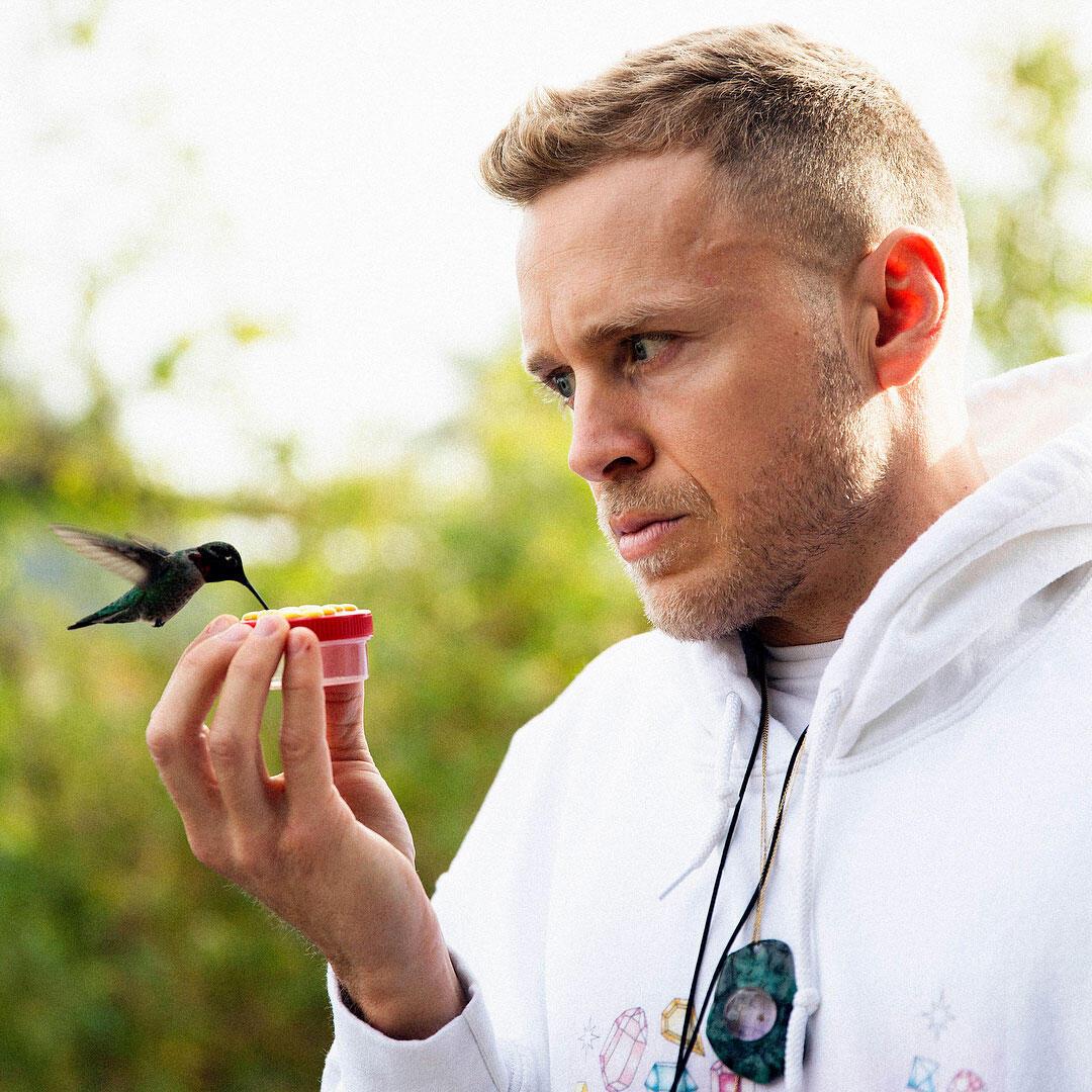 Anna's Hummingbird. Spencer Pratt