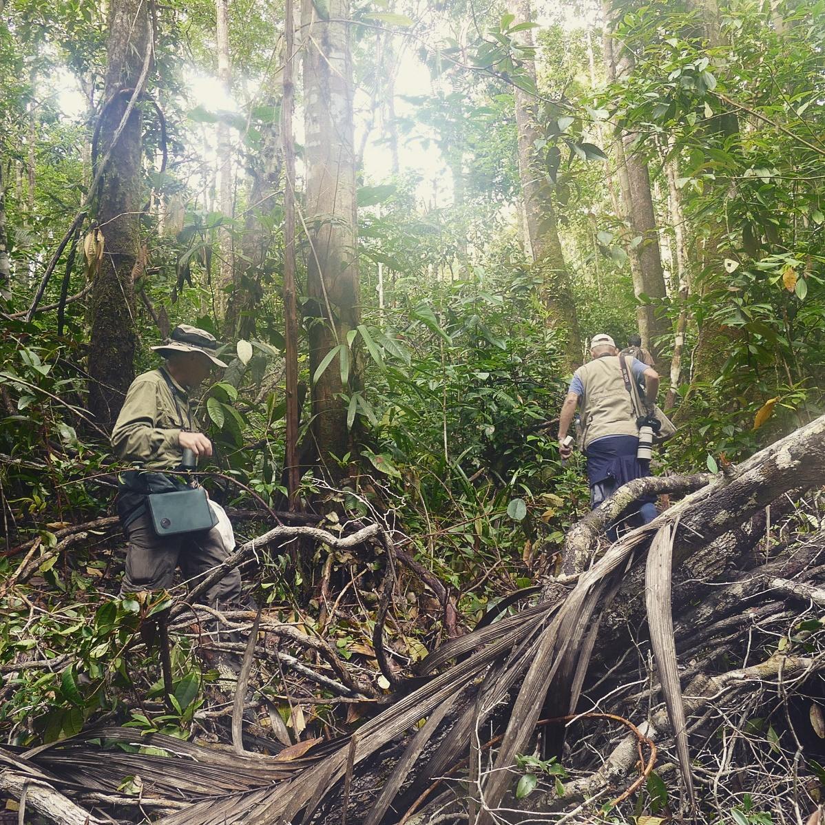 Glenn and Gunnar pick their way through a patch of white-sand forest near Iquitos, Peru. Noah Strycker