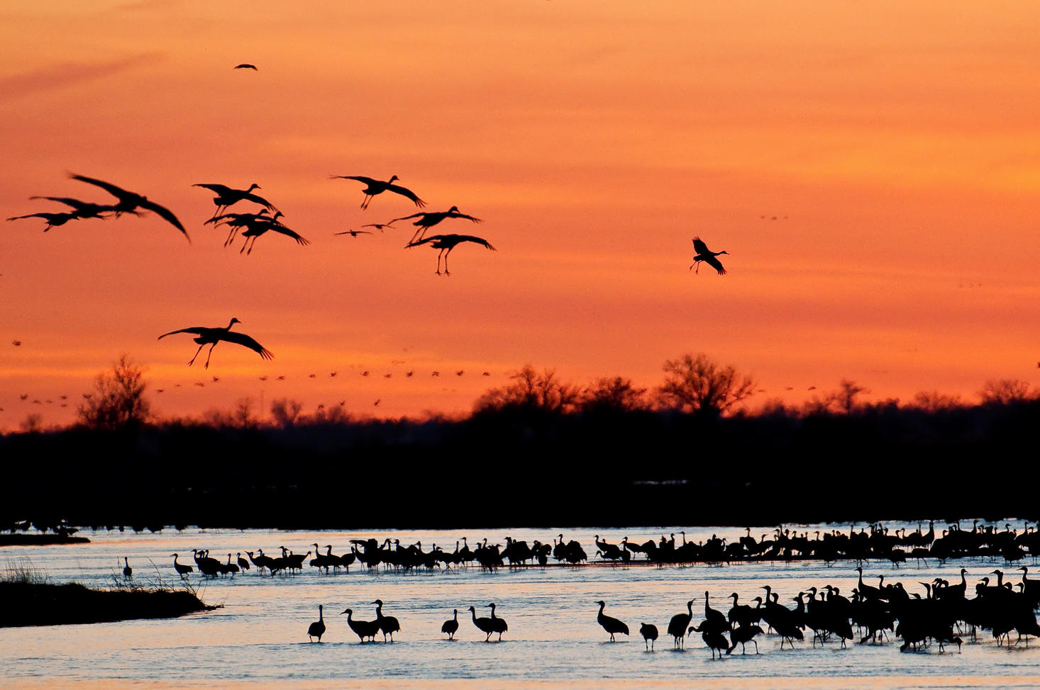 Sandhill Cranes at Dusk. Rowe Sanctuary, Nebraska. Don Brockmeier