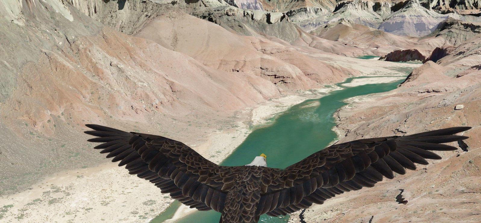 A Bald Eagle cruises over the Colorado River in FlightMap. National Audubon Society
