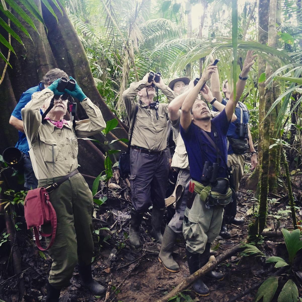 The Rockjumper group looks for a trogon in the forest at Shiripuno, Ecuador. Noah Strycker