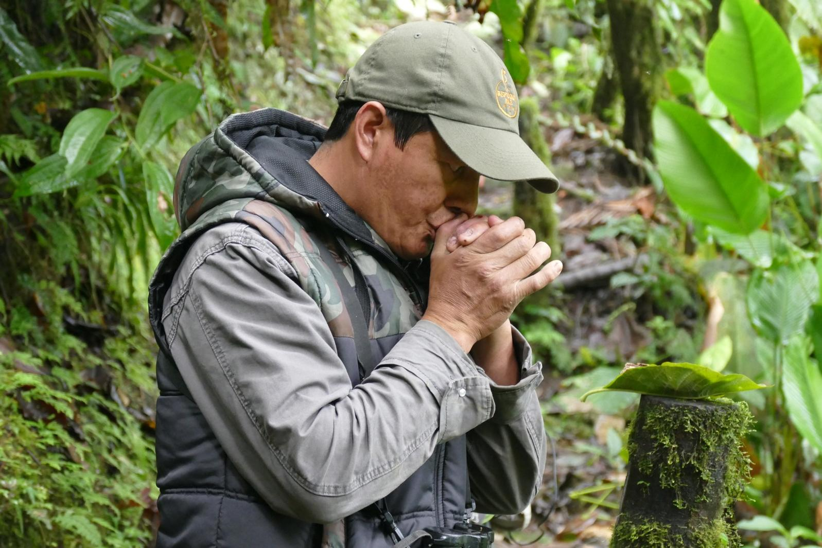Angel Paz calls to an antpitta in the forest. Noah Strycker