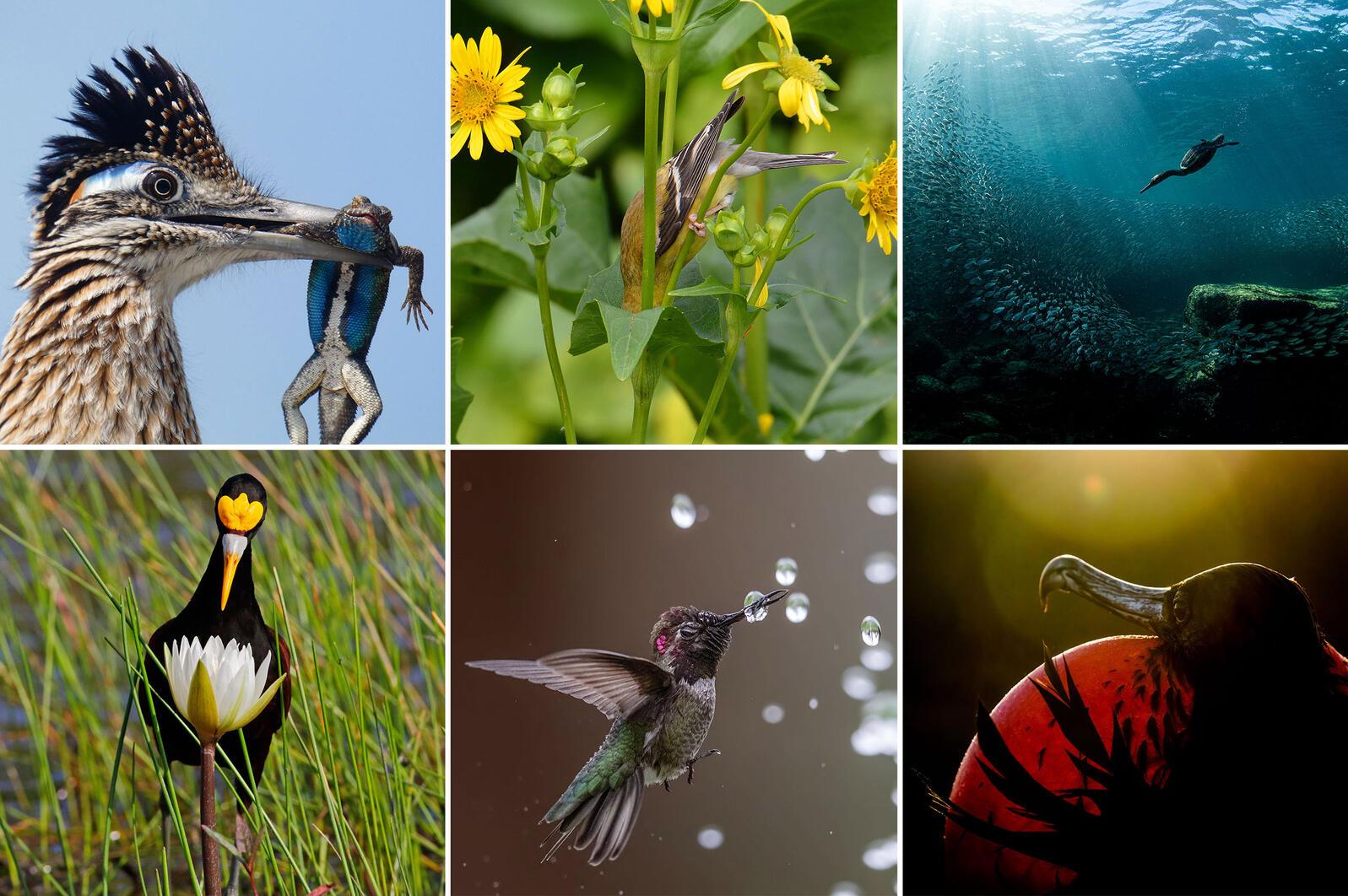 Audubon Photography Awards winners.