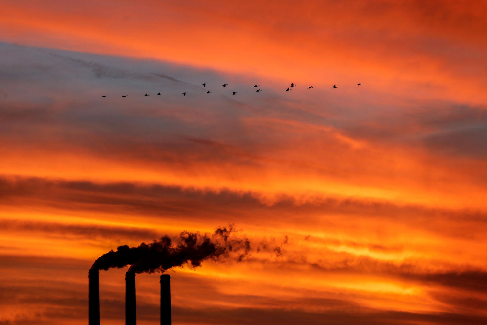 Canada Geese fly past a coal power plant in Kansas. Charlie Riedel/AP