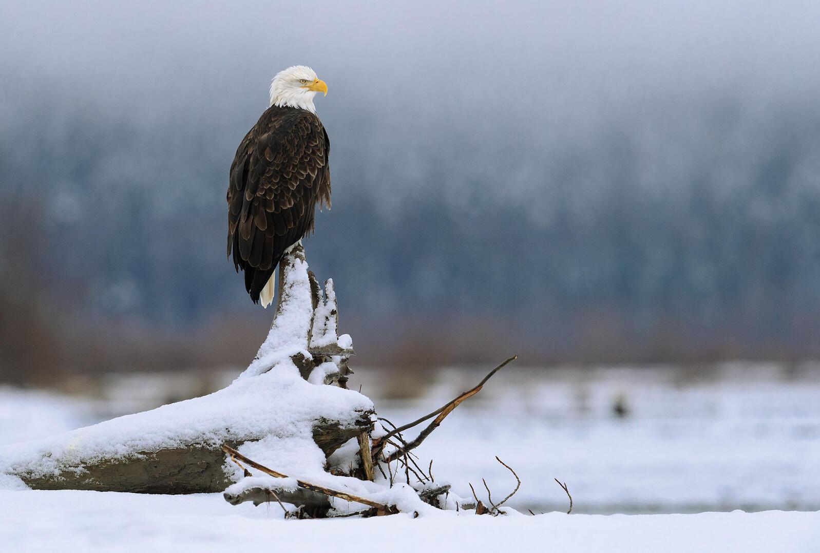 Bald Eagle. Bruno Struck/Audubon Photography Awards