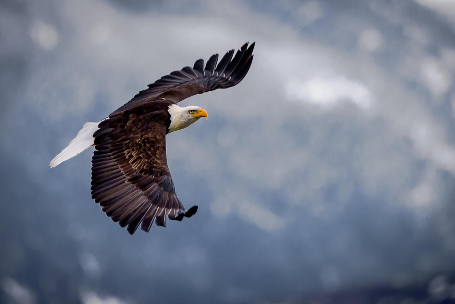 Bald Eagle. Don Berman/Audubon Photography Awards