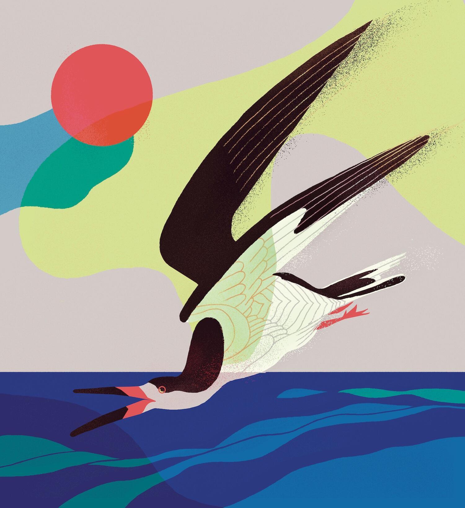 Illustration: Ana Galvañ