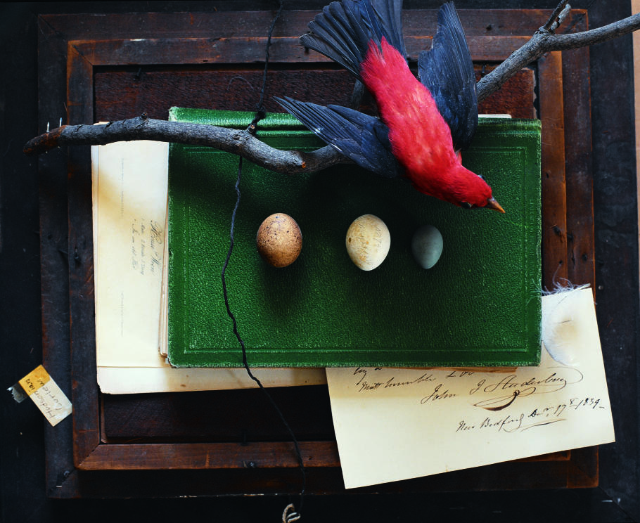 A scarlet tanager and John James Audubon's correspondence are among the items on display in the ivy-covered house at Mill Grove. Photograph by Susie Cushner