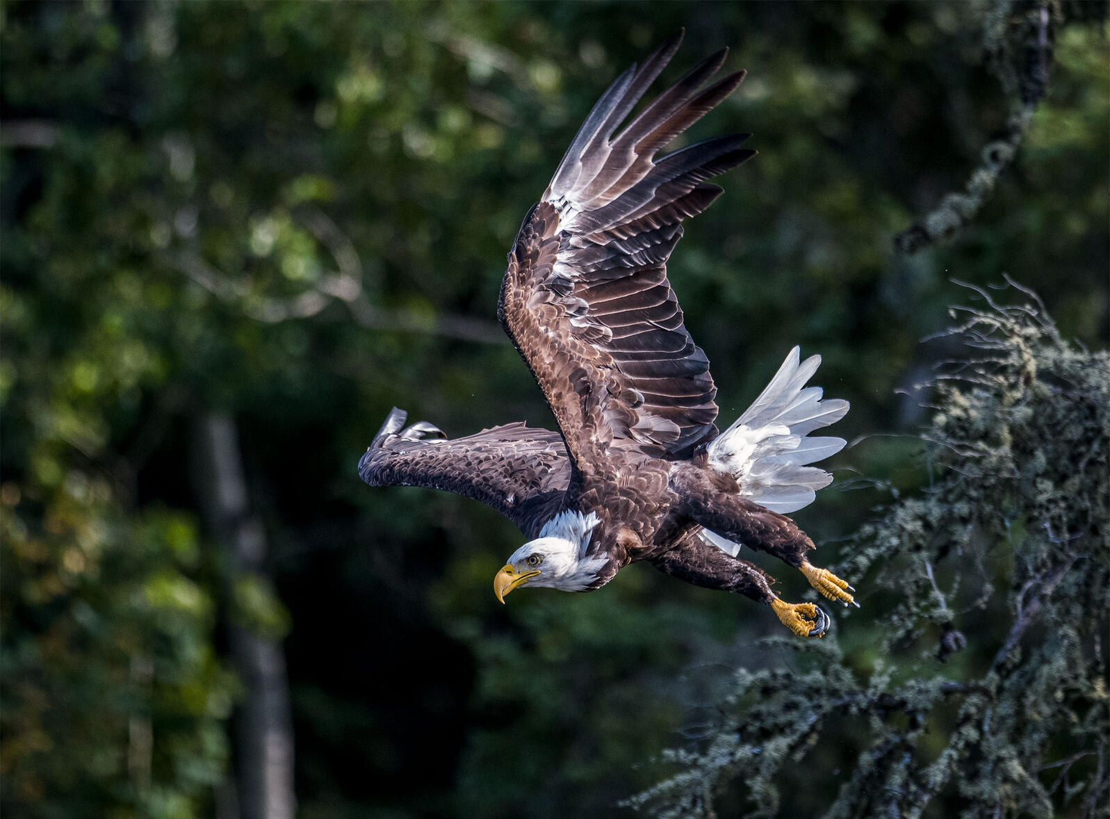Bald Eagle. Sharon Walker/Audubon Photography Awards