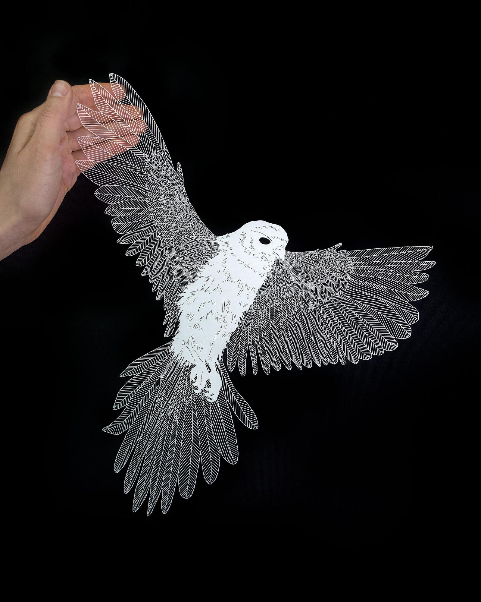 Illustration: Maude White; Photo: Mike Fernandez/Audubon