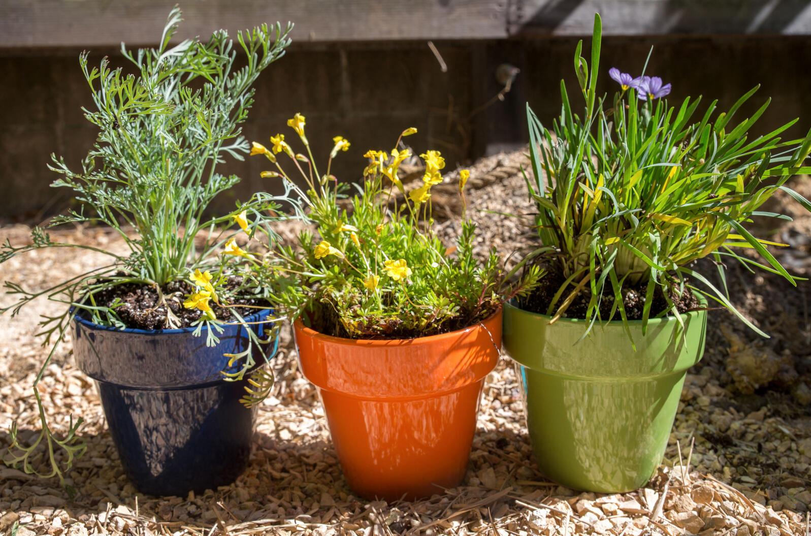 Brighten Up Your Balcony Or Patio With A Diy Native Plant Garden Audubon