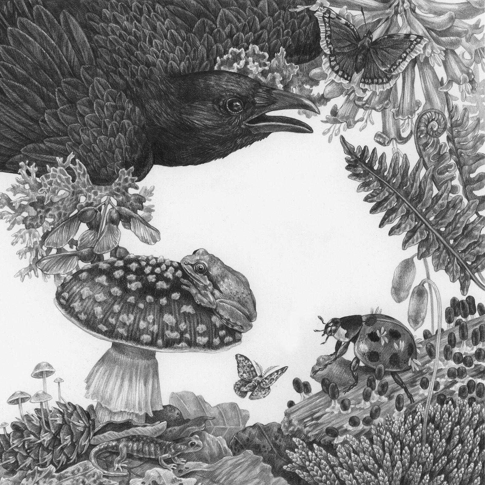 Art from Nature Obscura: A City's Hidden Natural World, by Kelly Brenner. Illustration: Zoe Keller