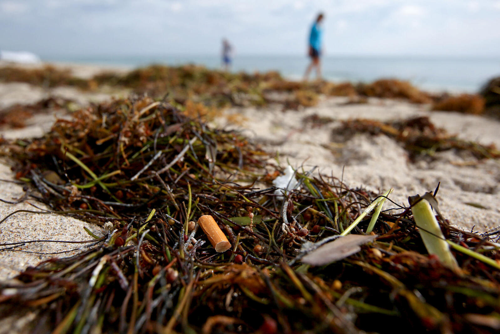 Cigarette butts litter a beach in Florida. Zuma Press Inc/Alamy