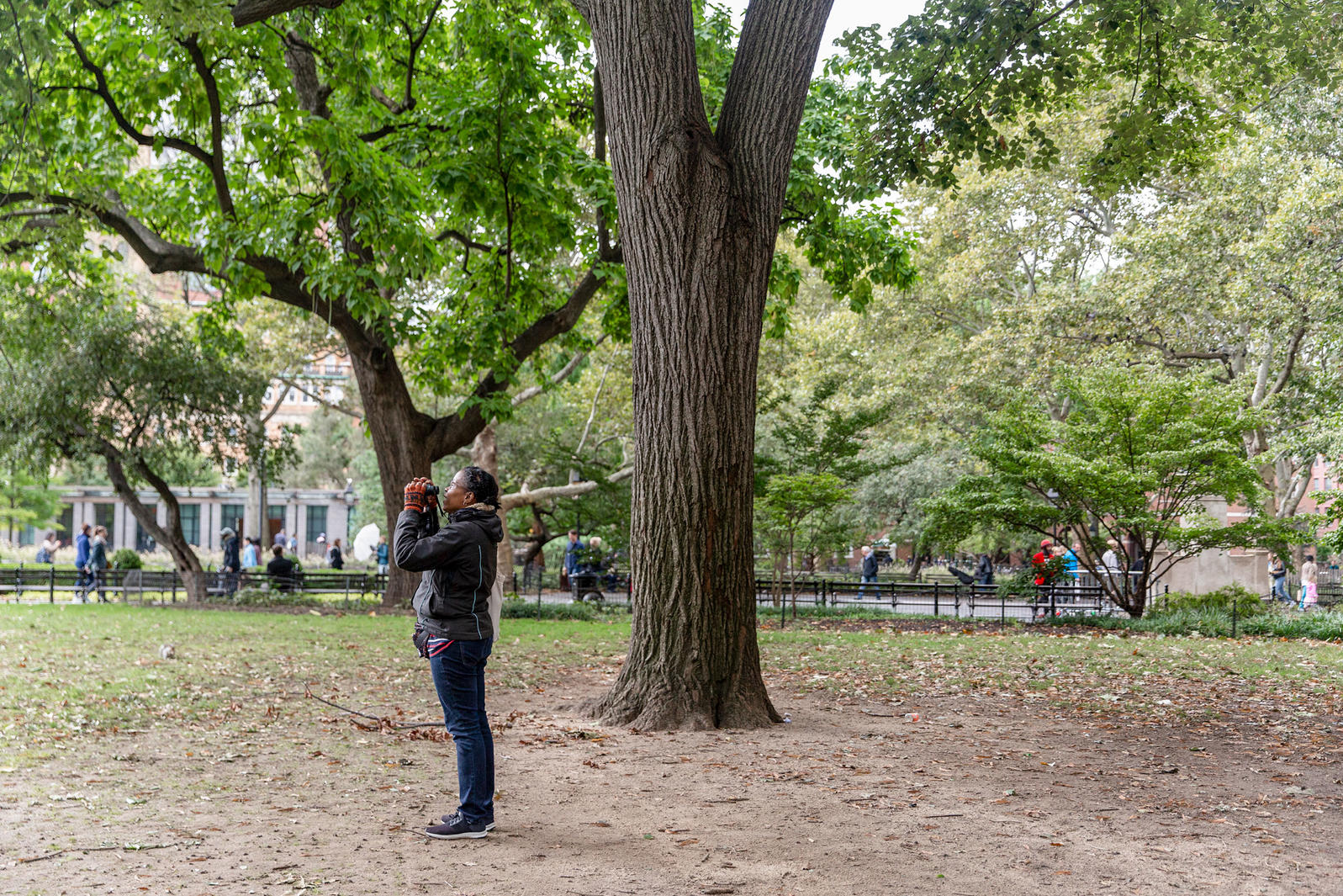 The author birding in her patch in Washington Square Park, New York City. Eva Deitch
