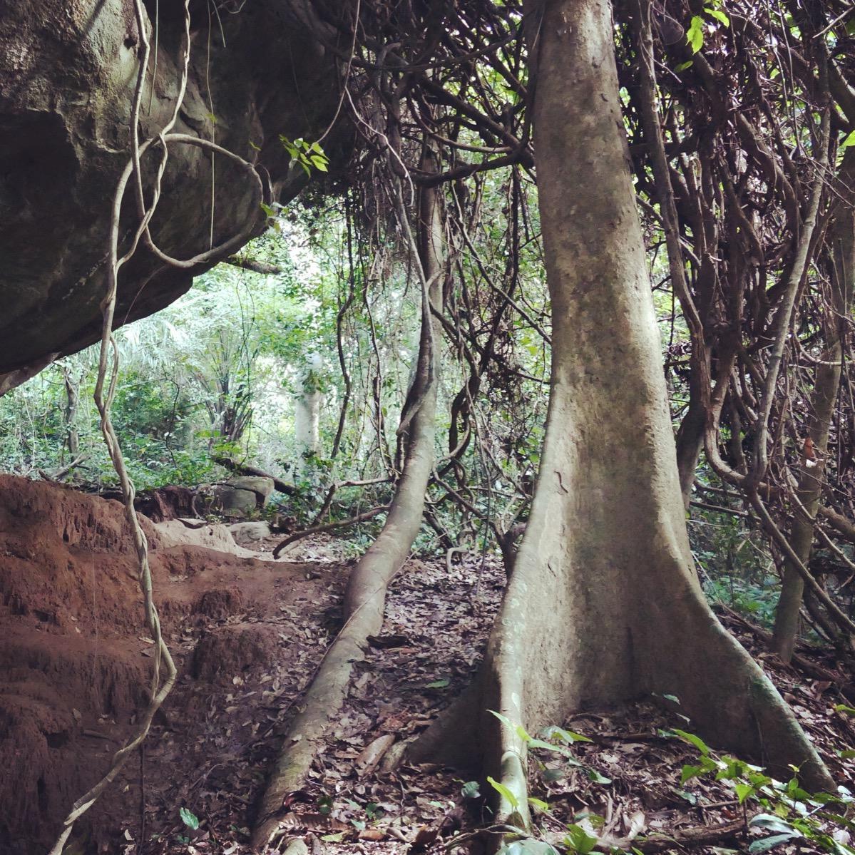 The Yellow-headed Picathartes cave near dusk. Noah Strycker