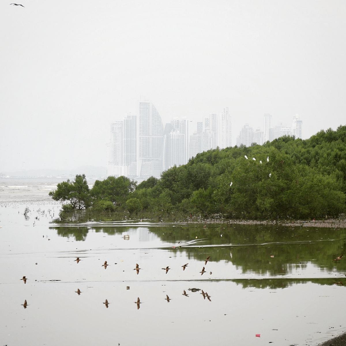 The shorebird flats at Panama Bay are backdropped by the skyscrapers of downtown Panama City. Noah Strycker