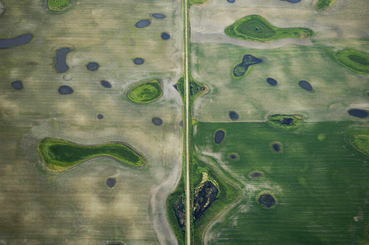 Prairie pothole region - Missouri coteau. A county road divides plowed grassland for agricultural production around pothole wetlands. Photograph by Michael Forsberg