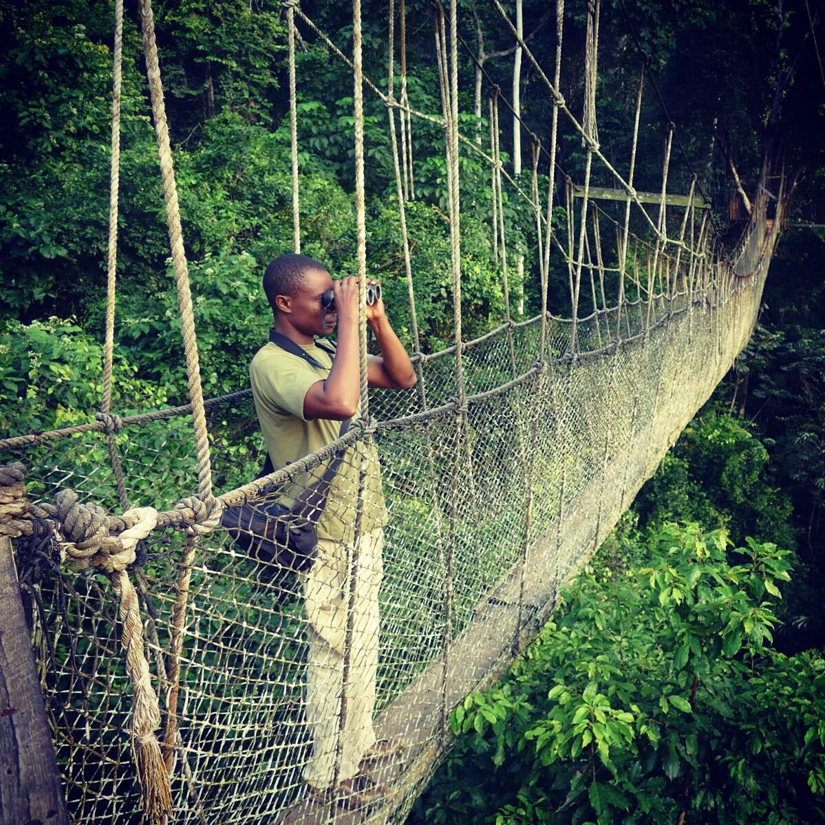 Kalu spots birds from Kakum National Park's canopy walkway. Noah Strycker