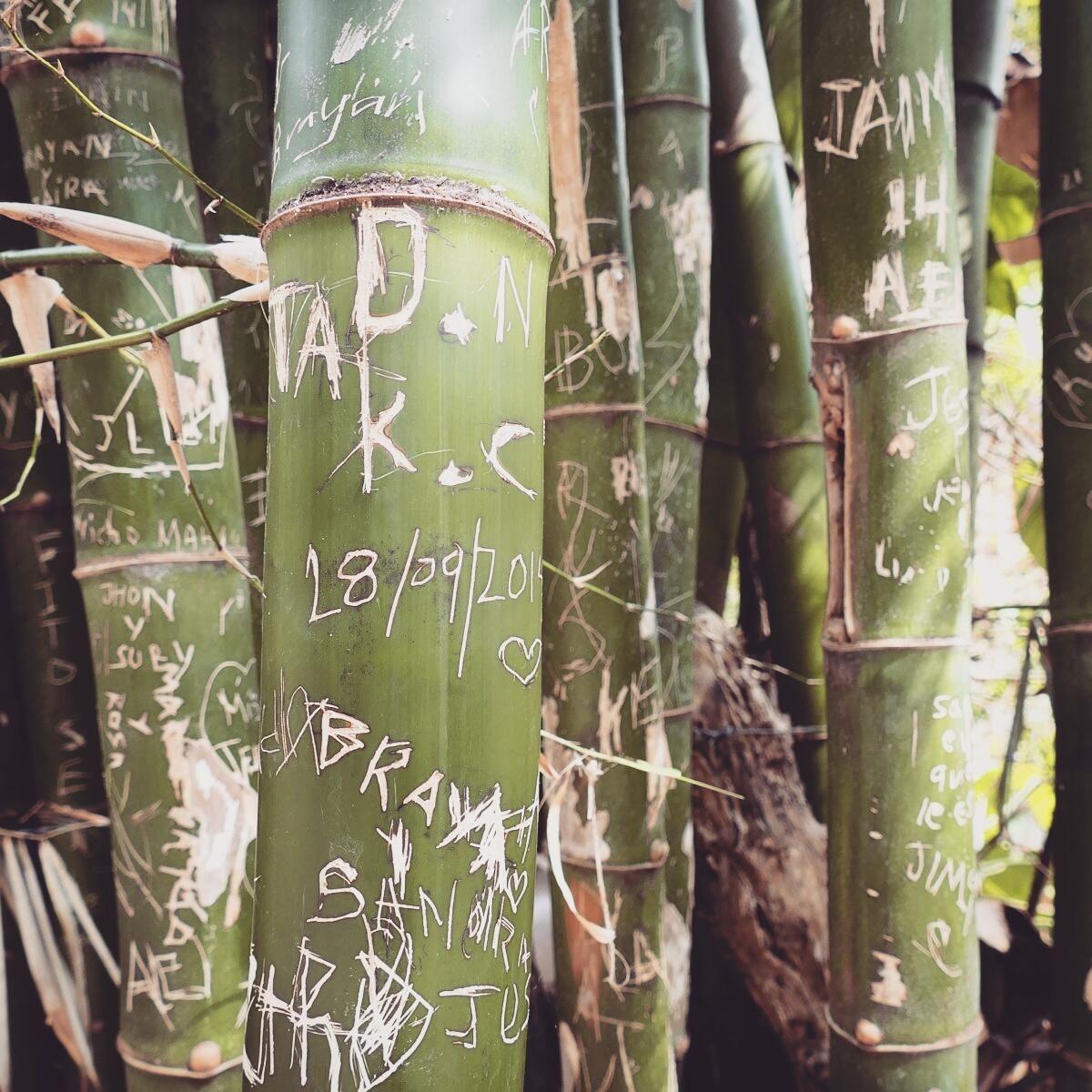 The passage of countless visitors is etched on a bamboo stand near Minca, Colombia. Noah Strycker