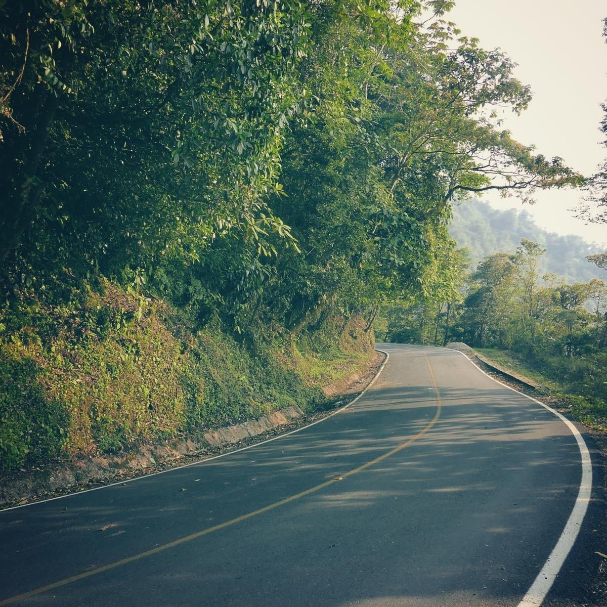 This road in eastern Oaxaca drops more than 10,000 feet from high, cool pine forests to low, hot rainforests. Noah Strycker