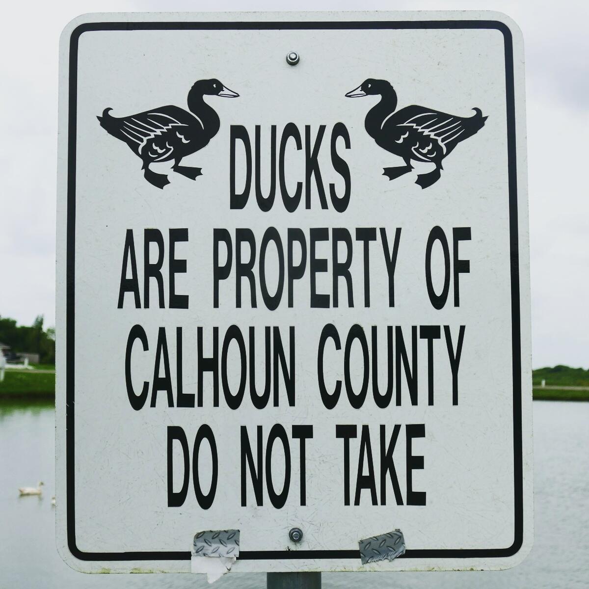 Whatever you do, don't take the ducks in Texas! Noah Strycker