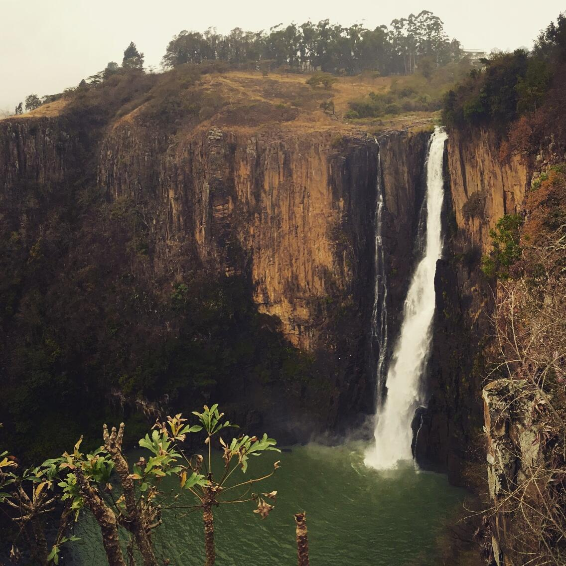 Howick Falls is a good spot to look for roosting Peregrine Falcons. Noah Strycker