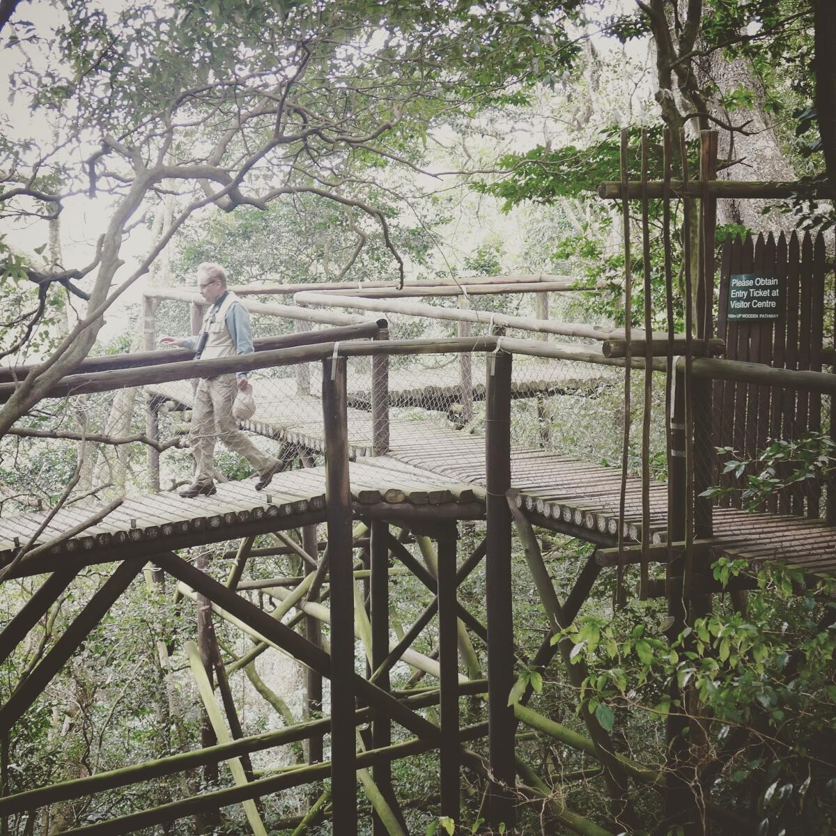 An aerial boardwalk leads into the forest canopy at the Dlinza Forest. Noah Strycker