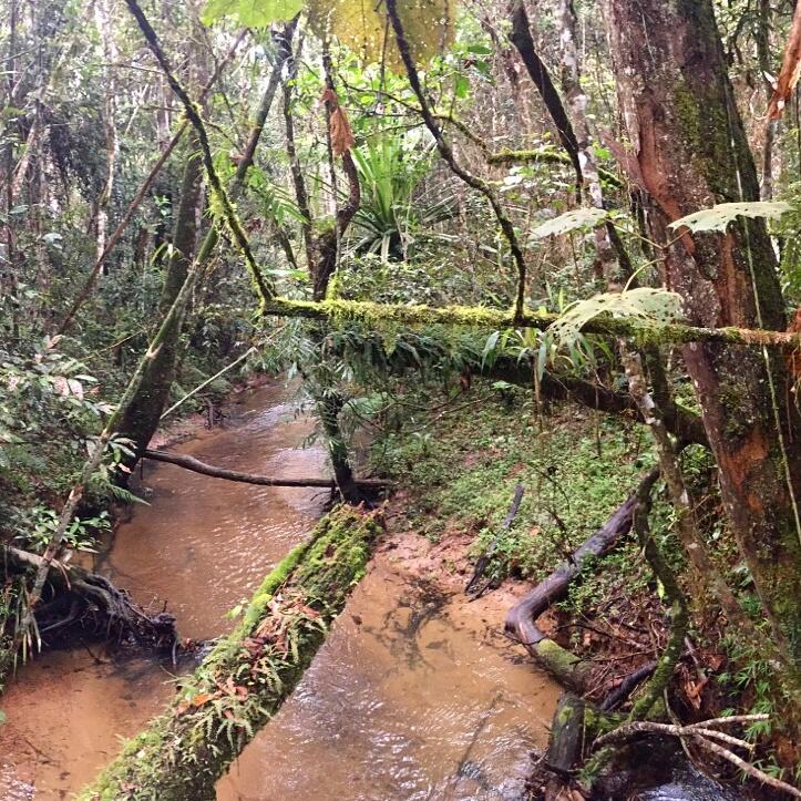 Rainforest at Mantadia National Park. Noah Strycker